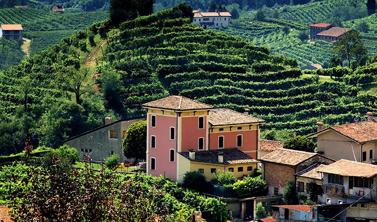 Full Day Private Prosecco Wines Tour from Venice